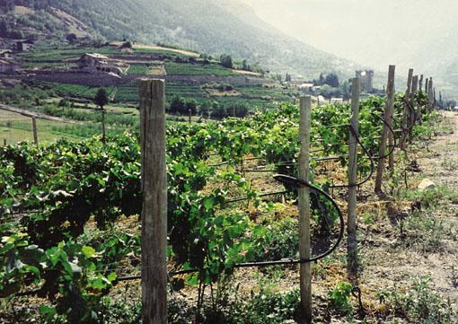 Rivista environnement for Irrigazione per aspersione